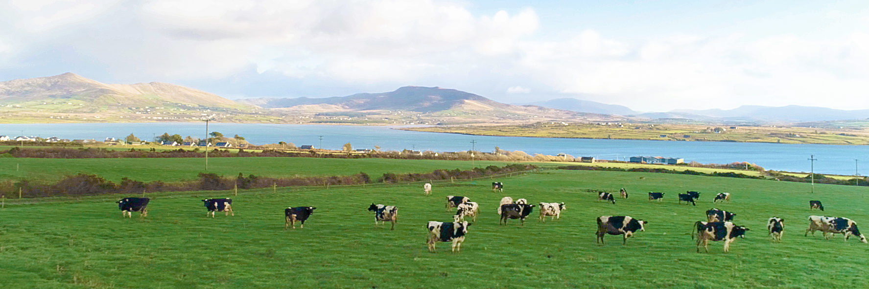 Traditional Dairy Farm Kerry | Daly's Farm Valentia | Valentia Ice Cream